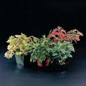 Terrestrial Plant Set for Water's Edge Aquarium
