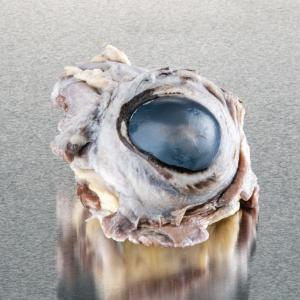 Ward's® Pure Preserved™ Cow Eyes