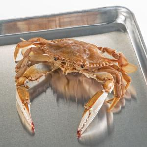 Ward's® Pure Preserved™ Blue Crab