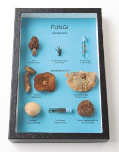 Comparative Fungi Riker Mount, Ward's®