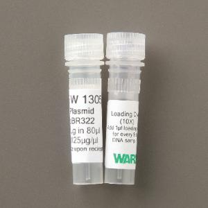 Ward's® Plasmid DNA for Transformations