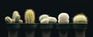 Cactus Set of 5