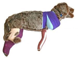 Rescue Critters® Rufus Bandaging Manikin