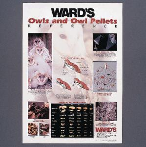 Ward's® Owls and Owl Pellets Reference Poster