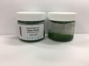 Ward's® Algae Beads (<i>Scenedesmus sp.</i>)