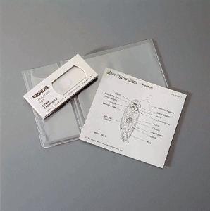 Euglena Explano-Mount™ Slide