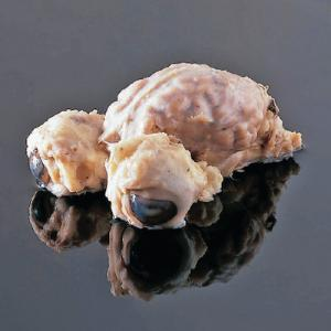 Fully Extracted Sheep Brain with Eyes
