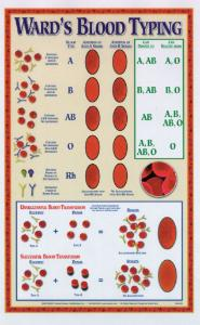 Ward's® Blood Typing Poster