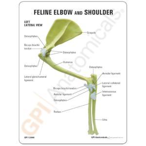 GPI Anatomicals® Feline Elbow / Shoulder