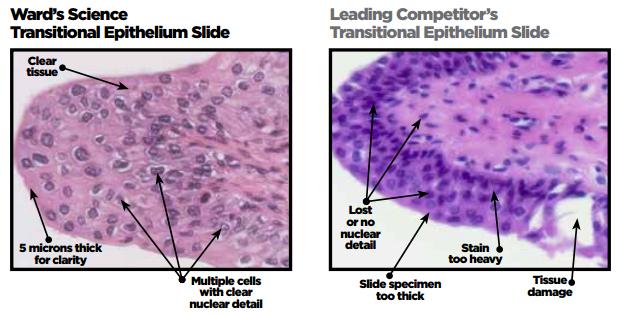 biology microscope slides ward s science